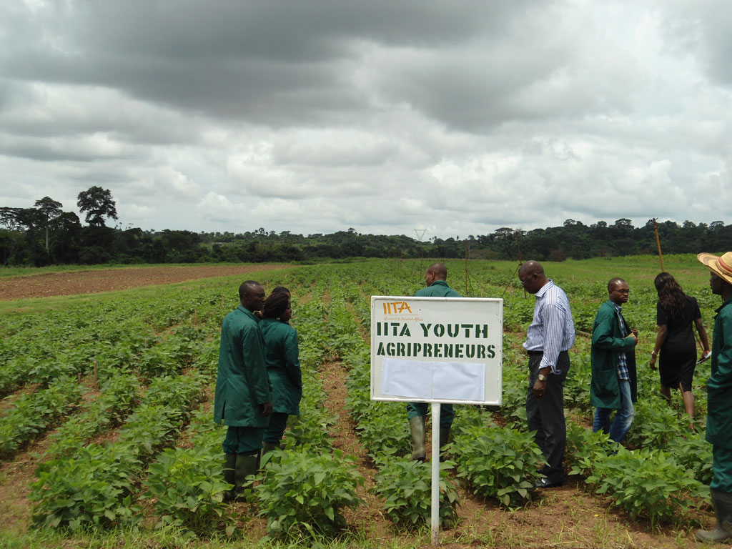 Dr Gbassey Tarawali (middle) with IYA on a soybean field