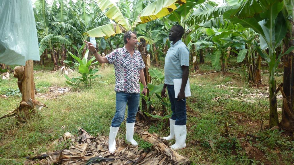 Dr Fen Beed of IITA and Dennis Ochola of Bioversity at the Foc TR4 afflicted farm in northern Mozambique
