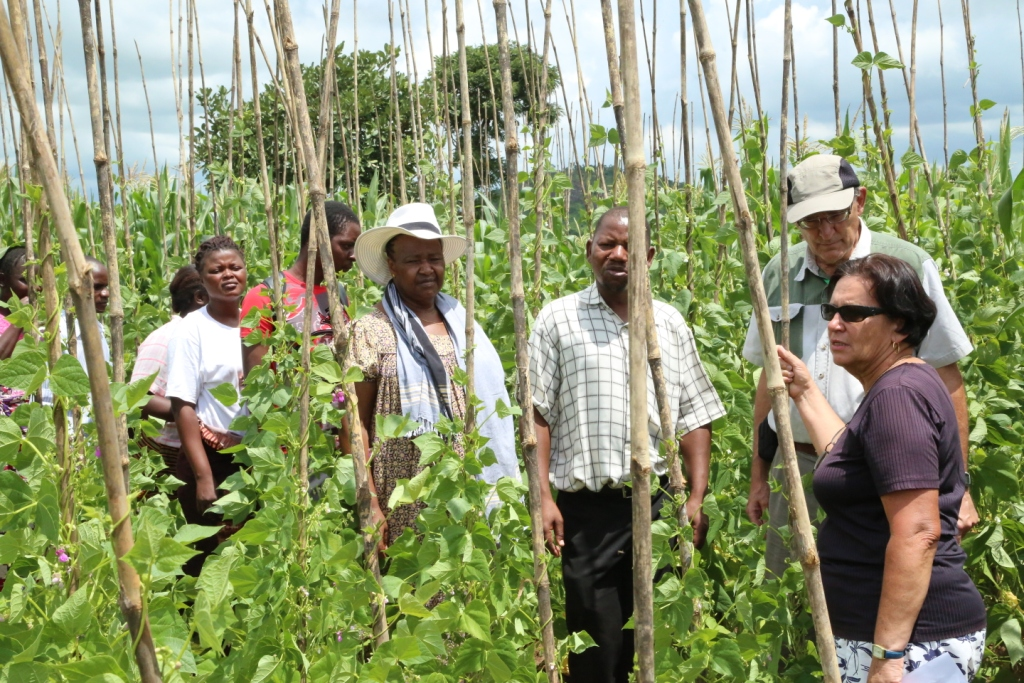 Irmgard Hoeschle-Zeledon (right), Jim Ellis-Jones (second right), Regis Chikowo (center) and Colletah Chitsike (center left) view a mother trial for climbing bean varieties in Linthipe, Malawi. Jim and Colletah were part of the team of three reviewers.