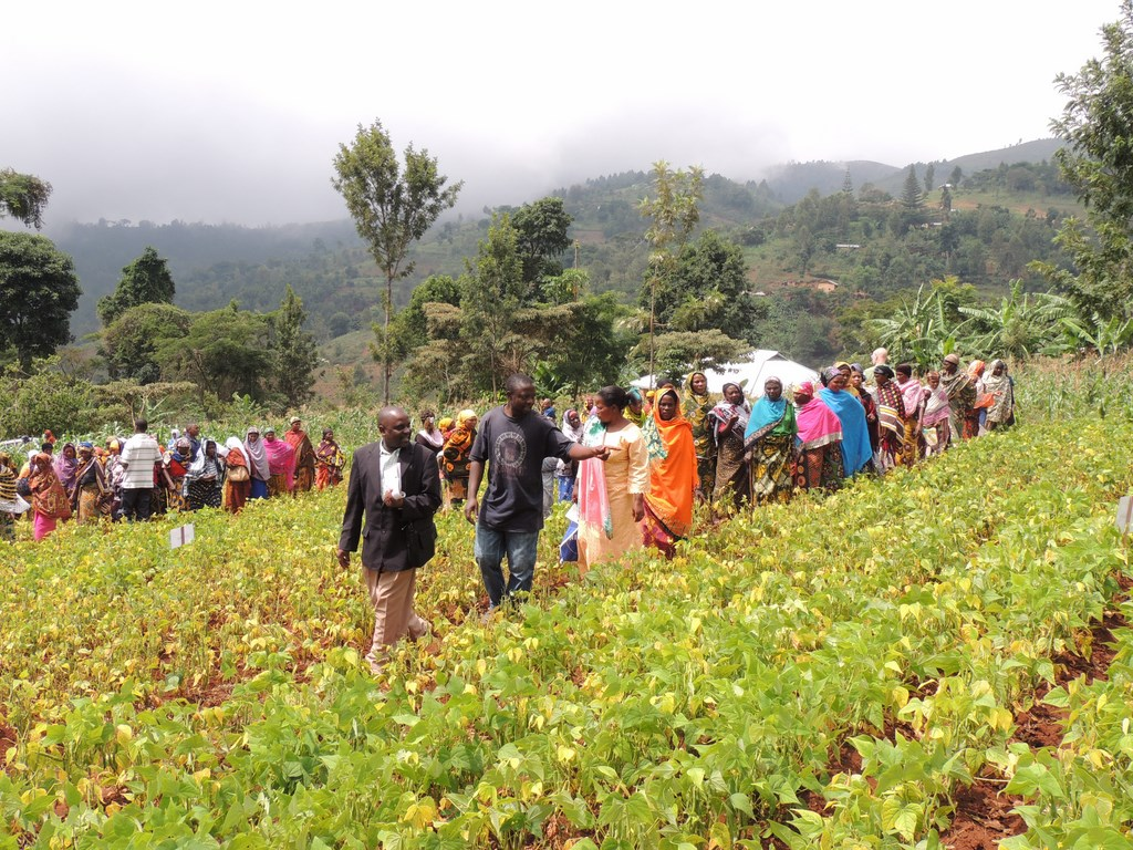 An N2Africa farmers' field day in Tanzania showcases modern legume-growing technologies.