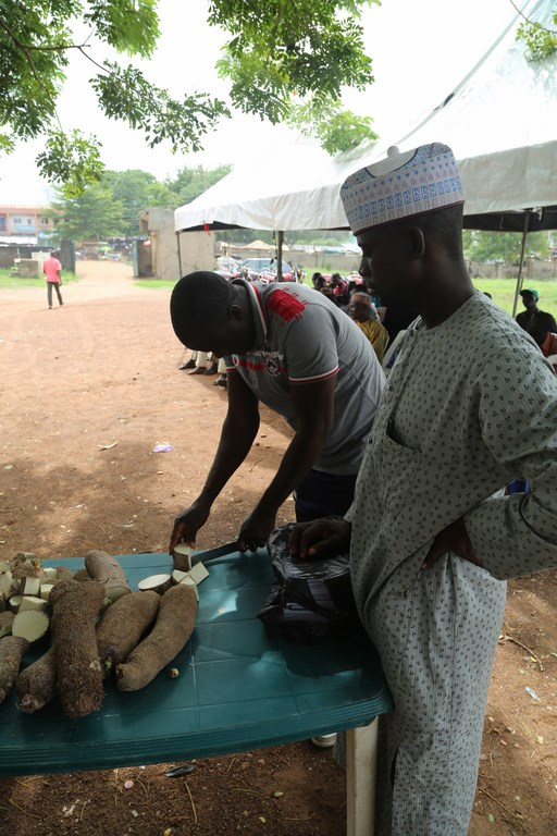 Farmer practices how to cut yam tubers into minisetts.