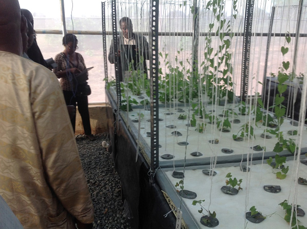 Scientists from CRI Ghana viewing yam plantlets growing at the aeroponics facility at Umudike.