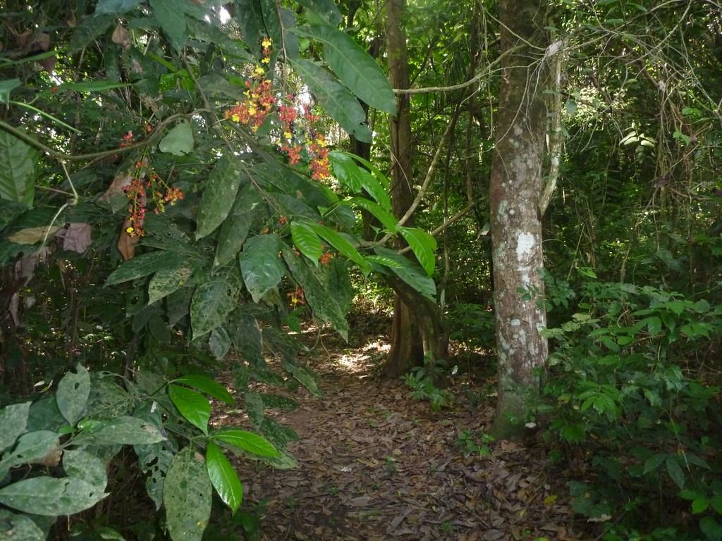 IITA Forest Reserve.