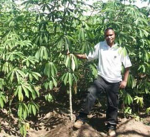 A happy cassava farmer shows off his field planted to IITA improved varieties.