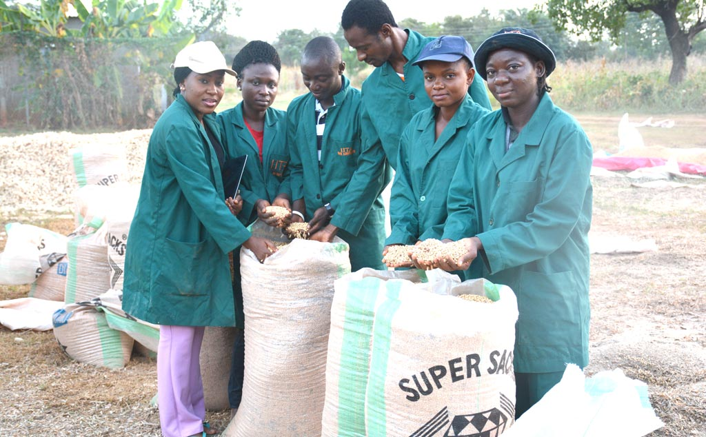 Picture of IITA Youth Agripreneurs at soybean seeds harvest point at Mokwa, Niger State