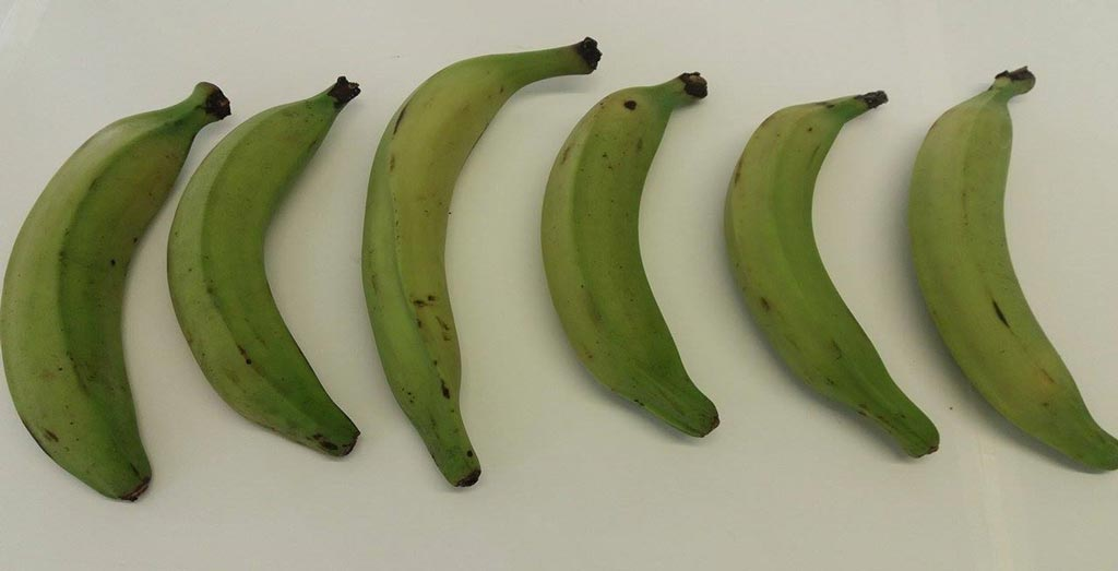 Picture of Plantain fruit. Nádia Campos, KU Leuven.