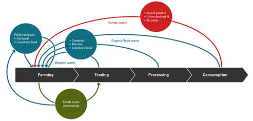The RUNRES Concept of a Circular Economy Model. In the CE model, nothing is wasted in the food cycle; after consumption, the waste is processed into manure and animal feed that is reused in crop/livestock production.