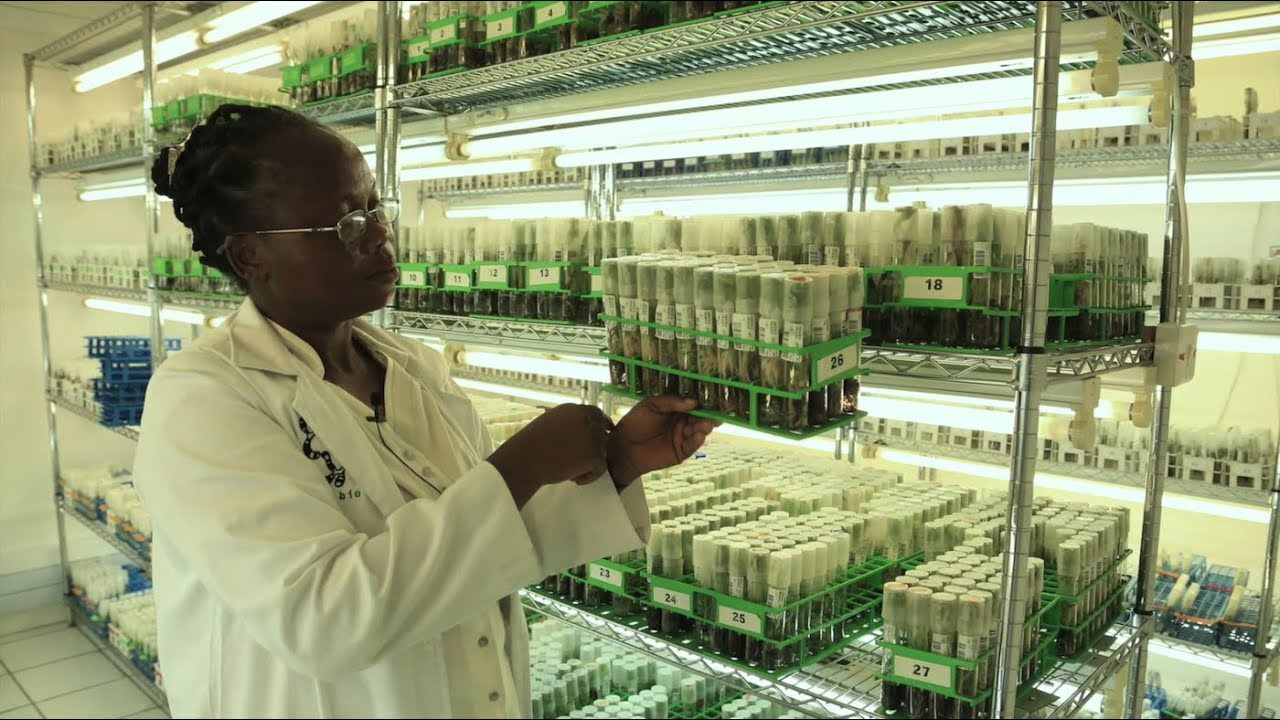 THE CGIAR GHUS: MAKING PLANTS AND THE WORLD SAFER THROUGH PHYTOSANITARY INTERVENTIONS