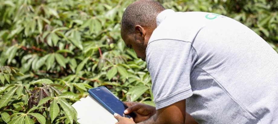 AKILIMO introduced in Rwanda for best cassava and potato fertilizer recommendations